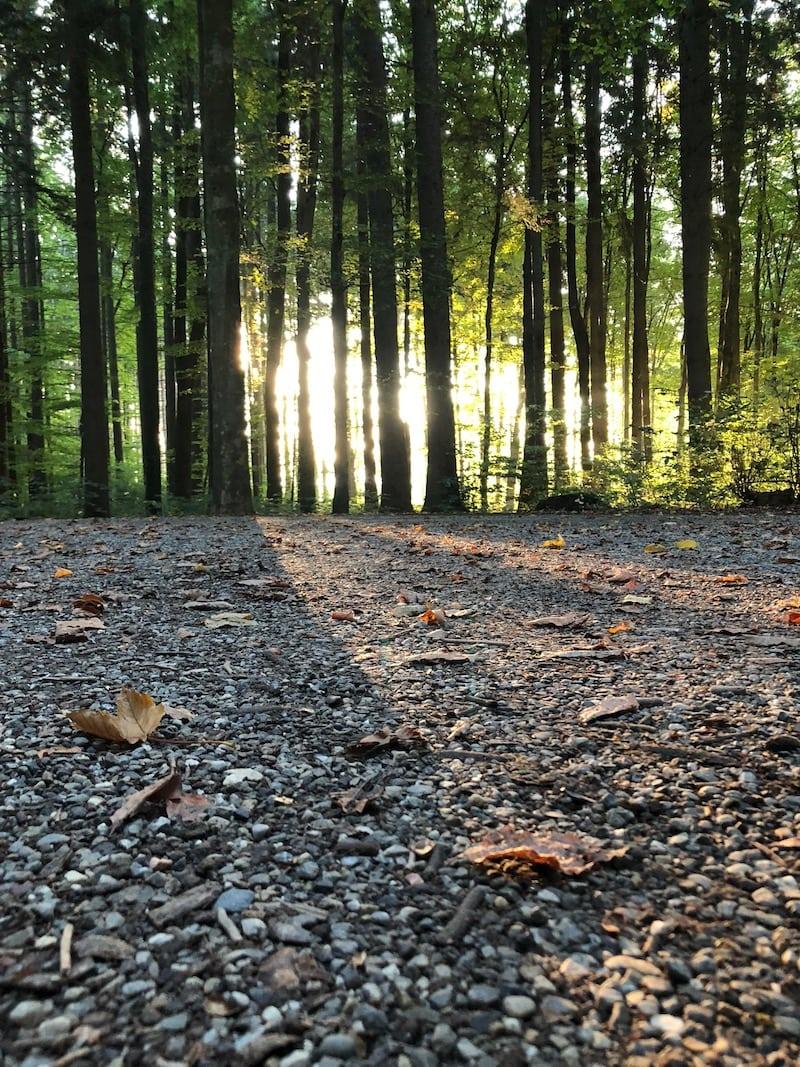 Sporttipps für den Alltag - Sport im Wald