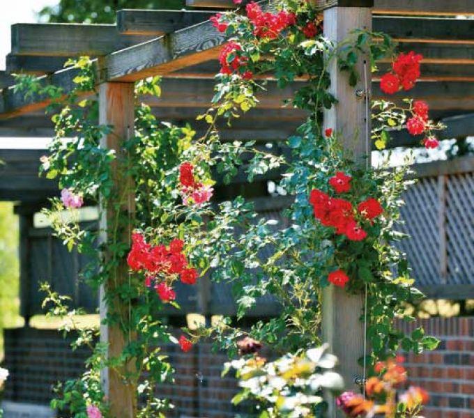 Von Rosen- und anderen Gartenträumen