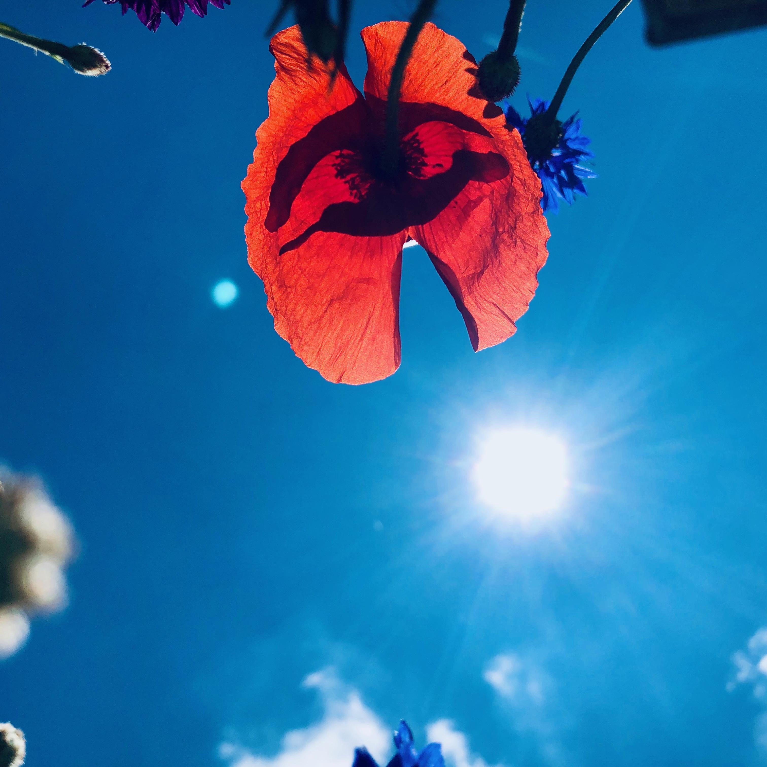 Monblumen Nachsorge nach der Reha